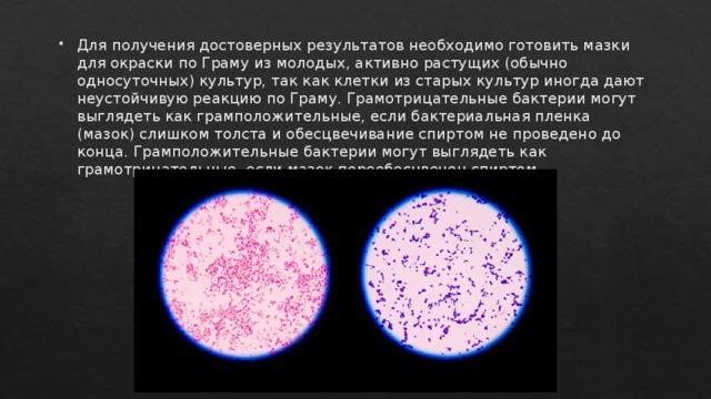 Для получения достоверных результатов необходимо готовить мазки для окраски по Граму из молодых, активно растущих (обычно односуточных) культур, так как клетки из старых культур иногда дают неустойчивую реакцию по Граму. Грамотрицательные бактерии могут выглядеть как грамположительные, если бактериальная пленка (мазок) слишком толста и обесцвечивание спиртом не проведено до конца. Грамположительные бактерии могут выглядеть как грамотрицательные, если мазок переобесцвечен спиртом.