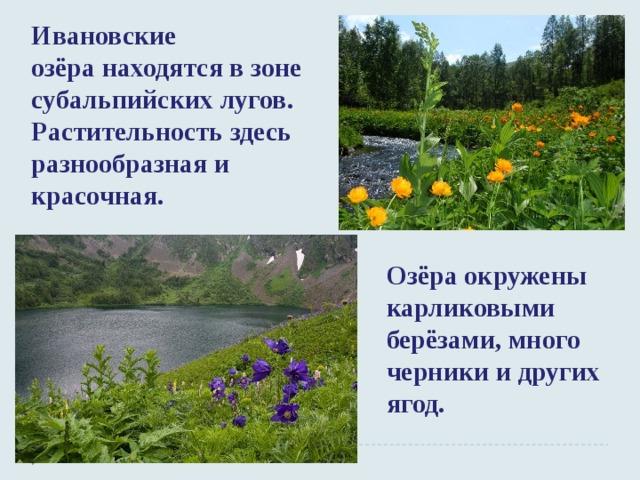 Ивановские озёранаходятся в зоне субальпийских лугов. Растительность здесь разнообразная и красочная. Озёра окружены карликовыми берёзами, много черники и других ягод.
