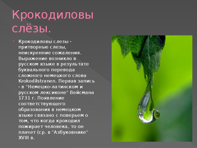 Крокодиловы слёзы.