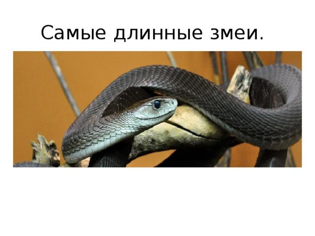Самые длинные змеи.