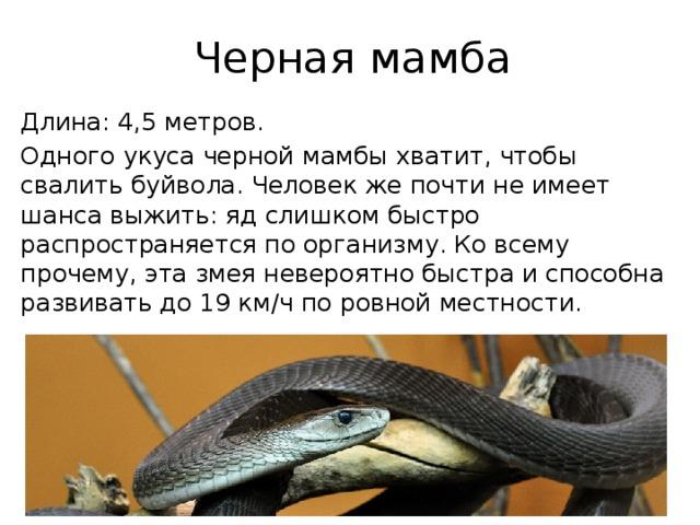 Черная мамба Длина: 4,5 метров. Одного укуса черной мамбы хватит, чтобы свалить буйвола. Человек же почти не имеет шанса выжить: яд слишком быстро распространяется по организму. Ко всему прочему, эта змея невероятно быстра и способна развивать до 19 км/ч по ровной местности.
