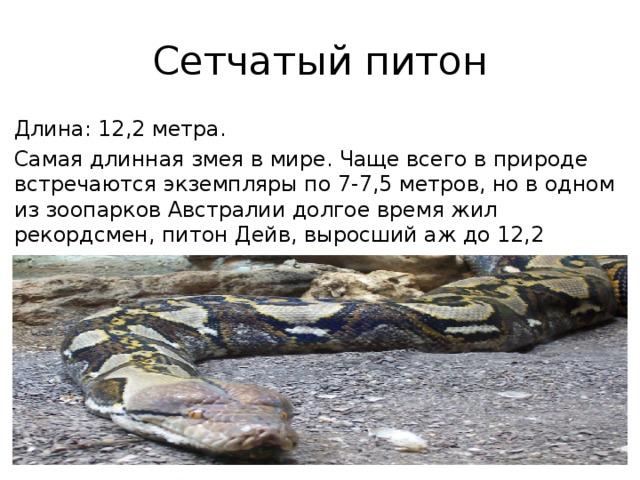 Сетчатый питон Длина: 12,2 метра. Самая длинная змея в мире. Чаще всего в природе встречаются экземпляры по 7-7,5 метров, но в одном из зоопарков Австралии долгое время жил рекордсмен, питон Дейв, выросший аж до 12,2 метров.