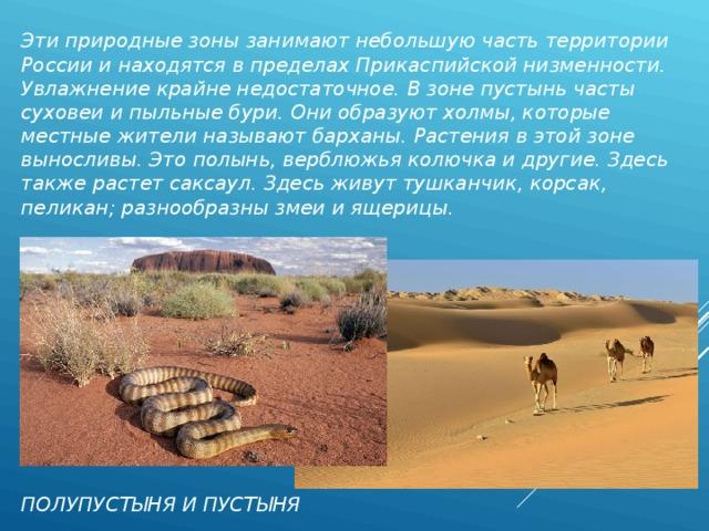 Эти природные зоны занимают небольшую часть территории России и находятся в пределах Прикаспийской низменности. Увлажнение крайне недостаточное. В зоне пустынь часты суховеи и пыльные бури. Они образуют холмы, которые местные жители называют барханы. Растения в этой зоне выносливы. Это полынь, верблюжья колючка и другие. Здесь также растет саксаул. Здесь живут тушканчик, корсак, пеликан; разнообразны змеи и ящерицы.  ПОЛУПУСТЫНЯ И ПУСТЫНЯ