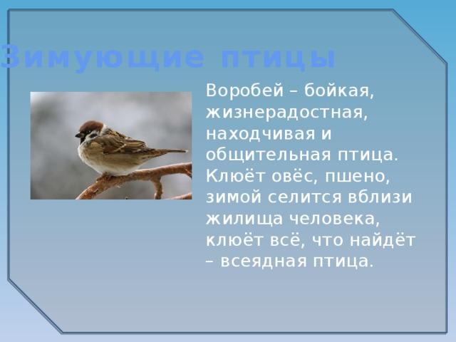Зимующие птицы Воробей – бойкая, жизнерадостная, находчивая и общительная птица. Клюёт овёс, пшено, зимой селится вблизи жилища человека, клюёт всё, что найдёт – всеядная птица.