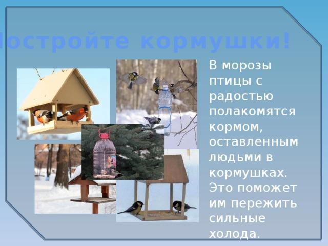 Постройте кормушки! В морозы птицы с радостью полакомятся кормом, оставленным людьми в кормушках. Это поможет им пережить сильные холода.