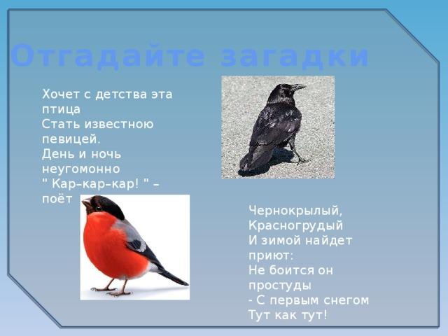Отгадайте загадки Хочет с детства эта птица Стать известною певицей. День и ночь неугомонно