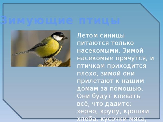 Зимующие птицы Летом синицы питаются только насекомыми. Зимой насекомые прячутся, и птичкам приходится плохо, зимой они прилетают к нашим домам за помощью. Они будут клевать всё, что дадите: зерно, крупу, крошки хлеба, кусочки мяса, несолёного сала.