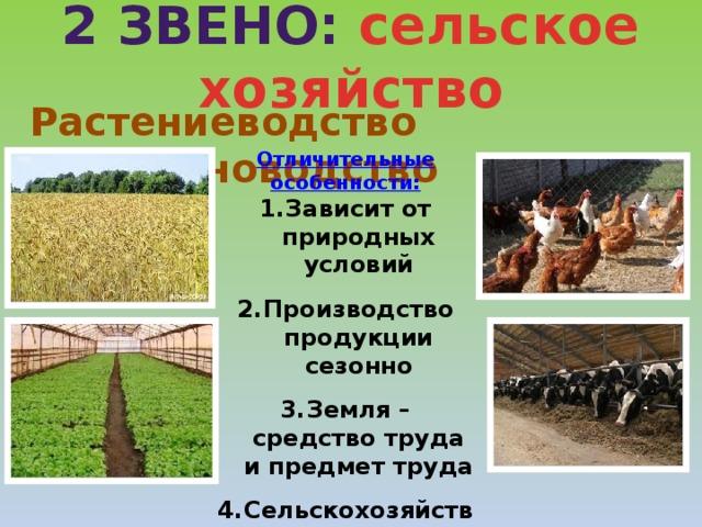 2 звено: сельское хозяйство Растениеводство  Животноводство Отличительные особенности: