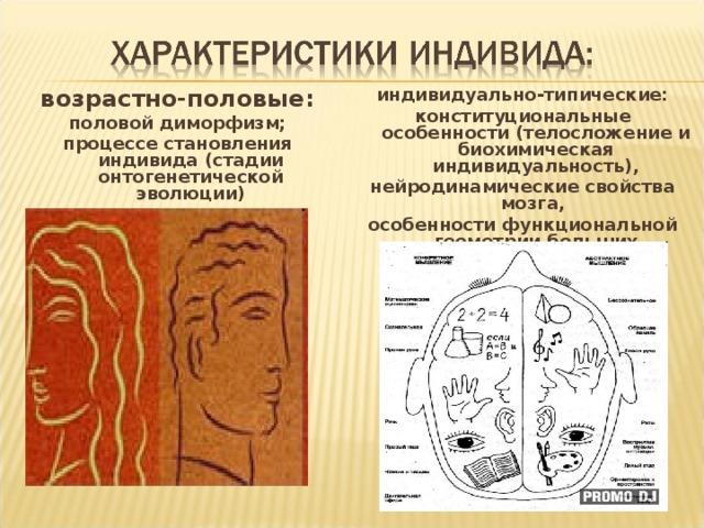 индивидуально-типические: конституциональные особенности (телосложение и биохимическая индивидуальность), нейродинамические свойства мозга, особенности функциональной геометрии больших полушарий (симметрии – асимметрии).  возрастно-половые: половой диморфизм; процессе становления индивида (стадии онтогенетической эволюции)