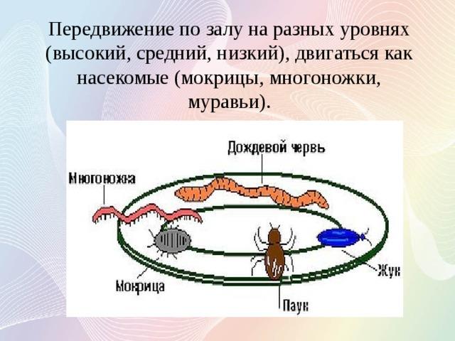 Передвижение по залу на разных уровнях (высокий, средний, низкий), двигаться как насекомые (мокрицы, многоножки, муравьи).