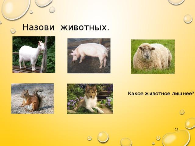 Назови животных. Какое животное лишнее? 7