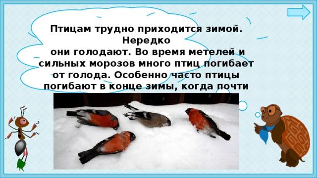 Птицам трудно приходится зимой. Нередко  они голодают. Во время метелей и сильных морозов много птиц погибает от голода. Особенно часто птицы погибают в конце зимы, когда почти весь корм повсюду съеден.