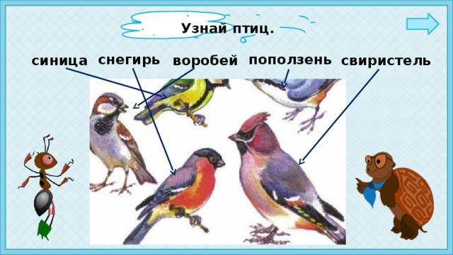 Узнай птиц. снегирь поползень синица воробей свиристель