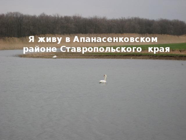 Я живу в Апанасенковском районе Ставропольского края