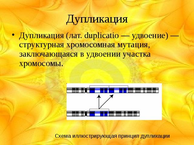 Дупликация Дупликация (лат. duplicatio — удвоение) — структурная хромосомная мутация, заключающаяся в удвоении участка хромосомы. Схема иллюстрирующая принцип дупликации