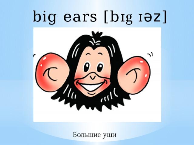 big ears [b ɪg ɪ әz ] Большие уши