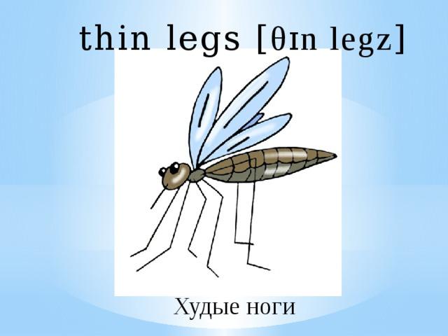 thin legs [ θɪn legz ] Худые ноги