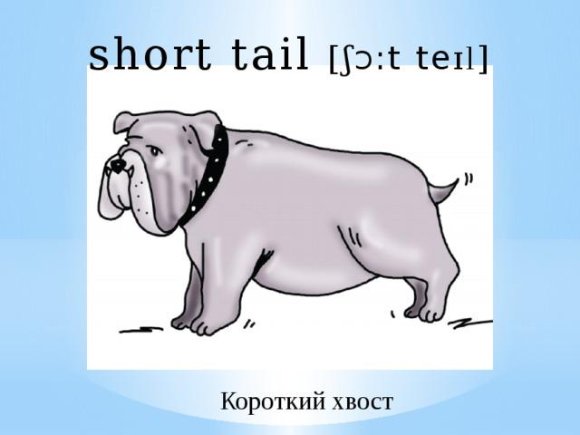 short tail [ ʃ Ɔ :t te ɪl ] Короткий хвост