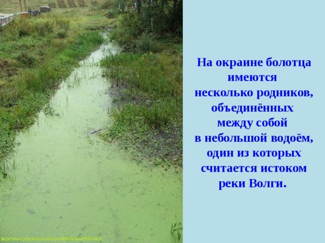 На окраине болотца имеются несколько родников, объединённых между собой в небольшой водоём, один из которых считается истоком реки Волги.