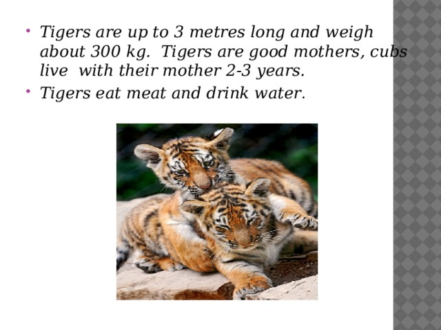 Tigers are up to 3 metres long and weigh about 300 kg. Tigers are good mothers, cubs live with their mother 2-3 years. Tigers eat meat and drink water .