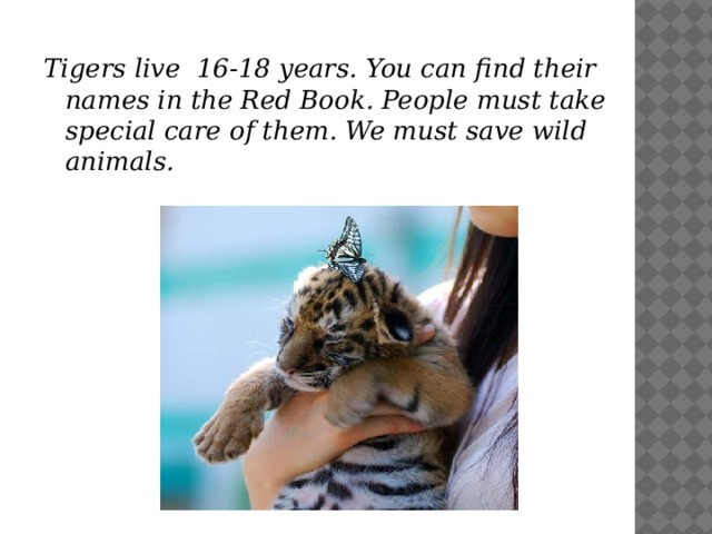 Tigers live 16-18 years. You can find their names in the Red Book. People must take special care of them. We must save wild animals.