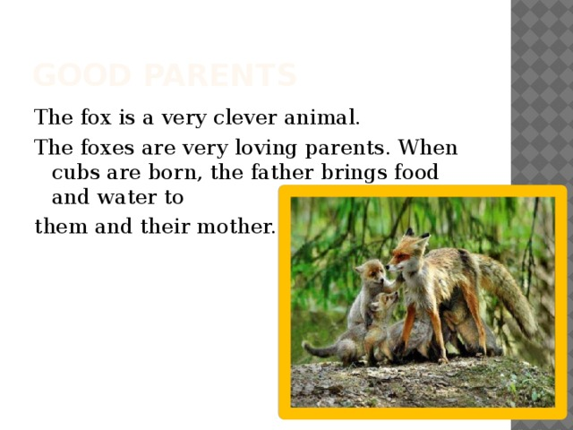 Good parents The fox is a very clever animal. The foxes are very loving parents. When cubs are born, the father brings food and water to them and their mother.