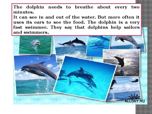 The dolphin needs to breathe about every two minutes. It can see in and out of the water. But more often it uses its ears to see the food. The dolphin is a very fast swimmer. They say that dolphins help sailors and swimmers.