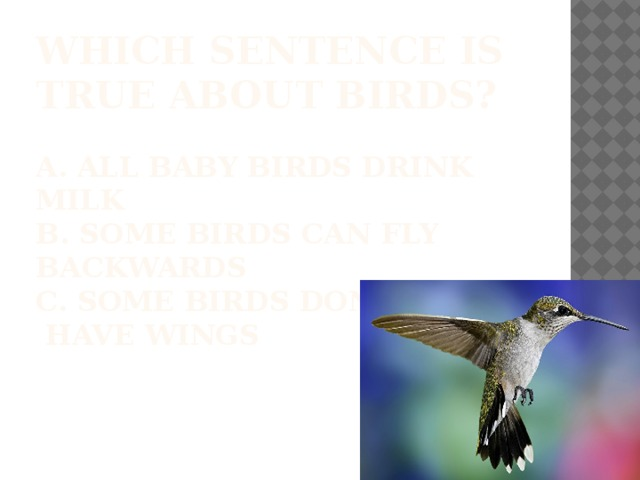 Which sentence is true about birds?   A. All baby birds drink milk  b. some birds can fly backwards  c. Some birds don't  have wings