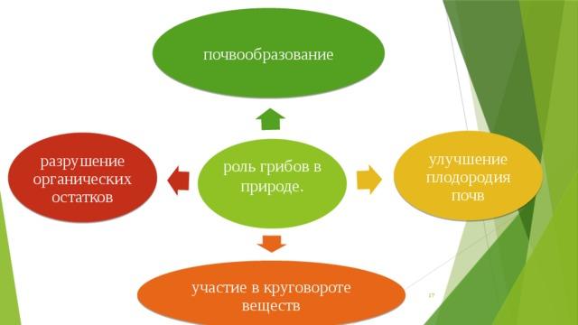 почвообразование улучшение плодородия почв разрушение органических остатков роль грибов в природе. участие в круговороте веществ 16
