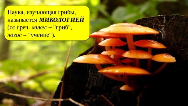 Наука, изучающая грибы, называется МИКОЛОГИЕЙ (от греч. микес –
