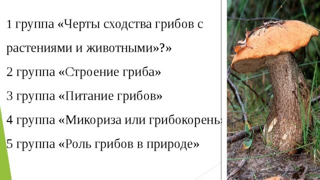 1 группа «Черты сходства грибов с растениями и животными»?» 2 группа «Строение гриба» 3 группа «Питание грибов» 4 группа «Микориза или грибокорень» 5 группа «Роль грибов в природе»