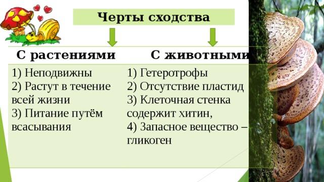 Черты сходства С растениями С животными 1) Неподвижны 2) Растут в течение всей жизни 1) Гетеротрофы 2) Отсутствие пластид 3) Питание путём всасывания 3) Клеточная стенка содержит хитин, 4) Запасное вещество – гликоген