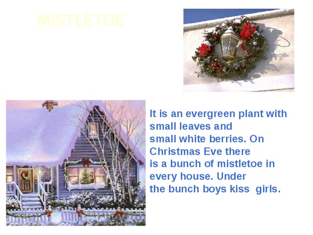 MISTLETOE It is an evergreen plant with small leaves and small white berries. On Christmas Eve there is a bunch of mistletoe in every house. Under the bunch boys kiss girls.