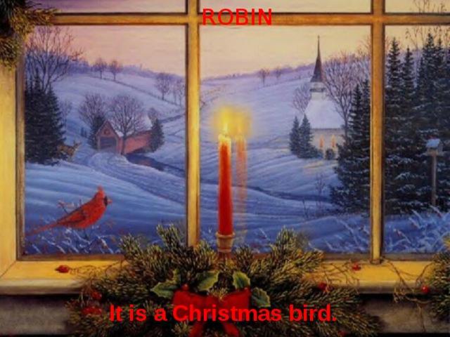 ROBIN It is a Christmas bird.