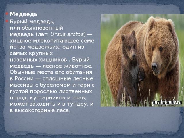 Медведь Бурый медведь, илиобыкновенный медведь(лат. Ursus arctos )— хищноемлекопитающеесемействамедвежьих; один из самых крупных наземныххищников . Бурый медведь— лесное животное. Обычные места его обитания в России— сплошные лесные массивы с буреломом и гари с густой порослью лиственных пород, кустарников и трав; может заходить и в тундру, и в высокогорные леса.