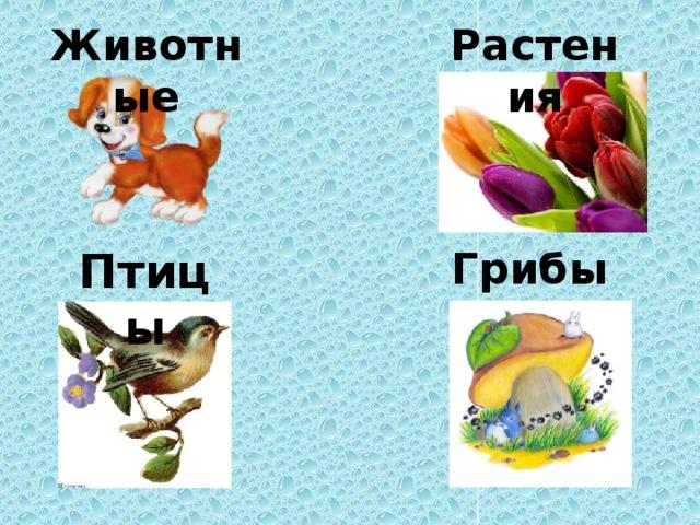 Животные Растения Птицы Грибы