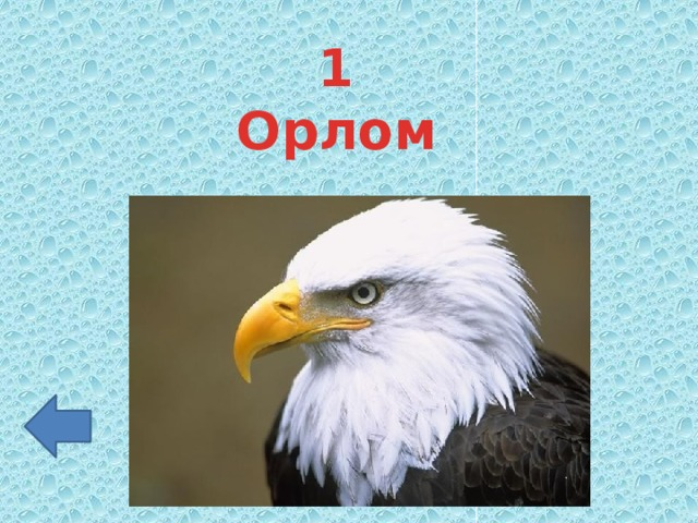 1 Орлом