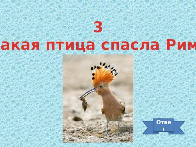 3 Какая птица спасла Рим? Ответ