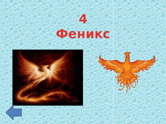 4 Феникс