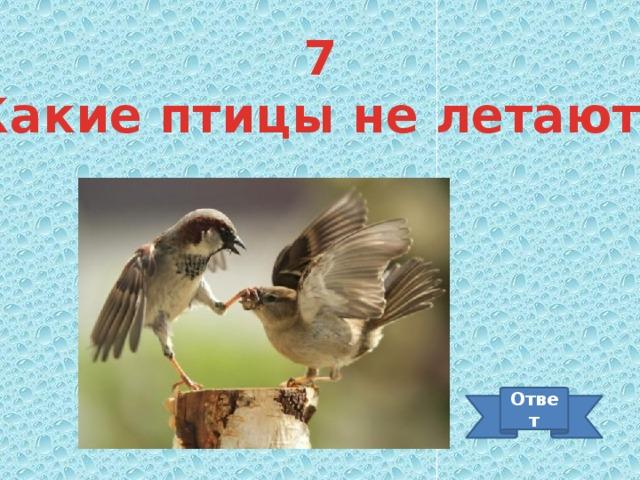7 Какие птицы не летают? Ответ