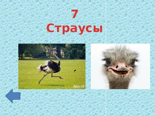 7 Страусы