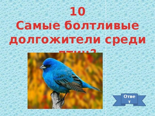 10 Самые болтливые долгожители среди птиц? Ответ