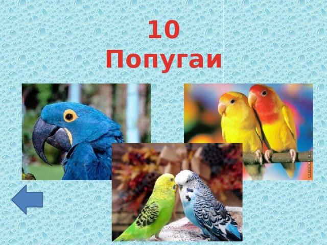10 Попугаи