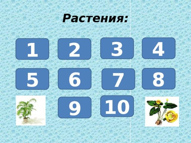 Растения: 3 4 1 2 6 8 5 7 10 9