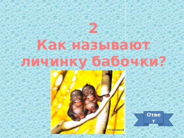 2 Как называют личинку бабочки? Ответ