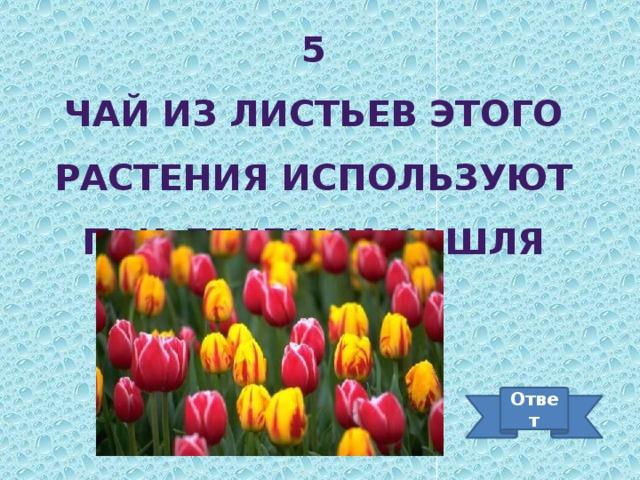 5 Чай из листьев этого растения используют при лечении кашля Ответ