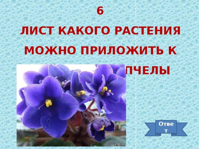 6 Лист какого растения можно приложить к месту укуса пчелы Ответ
