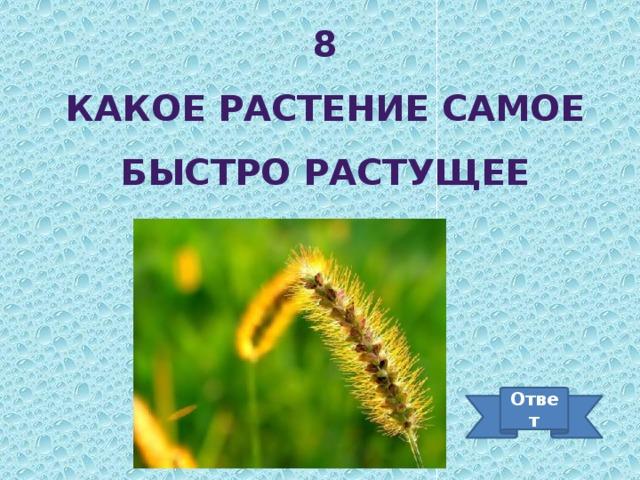 8 Какое растение самое быстро растущее Ответ