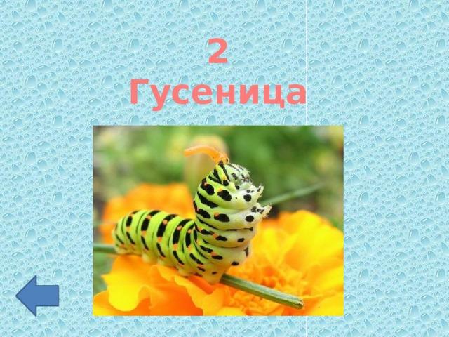 2 Гусеница