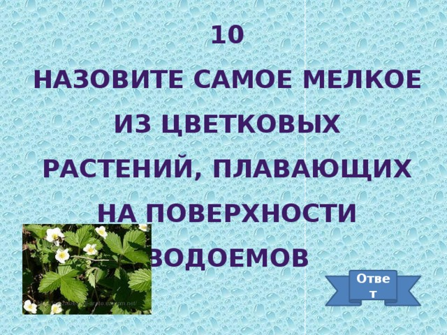 10 Назовите самое мелкое из цветковых растений, плавающих на поверхности водоемов Ответ